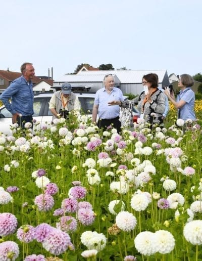 + Holland Dahlia Event 20 Lunch (Middel)