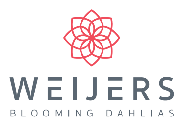 Weijers Blooming Dahlias