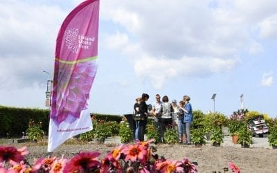Holland Dahlia Event continues full of enthusiasm
