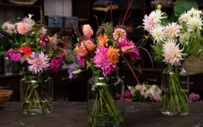 Get inspired, and make your own dahlia field bouquet!